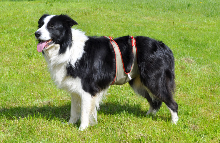 Best Dog Food For Collies